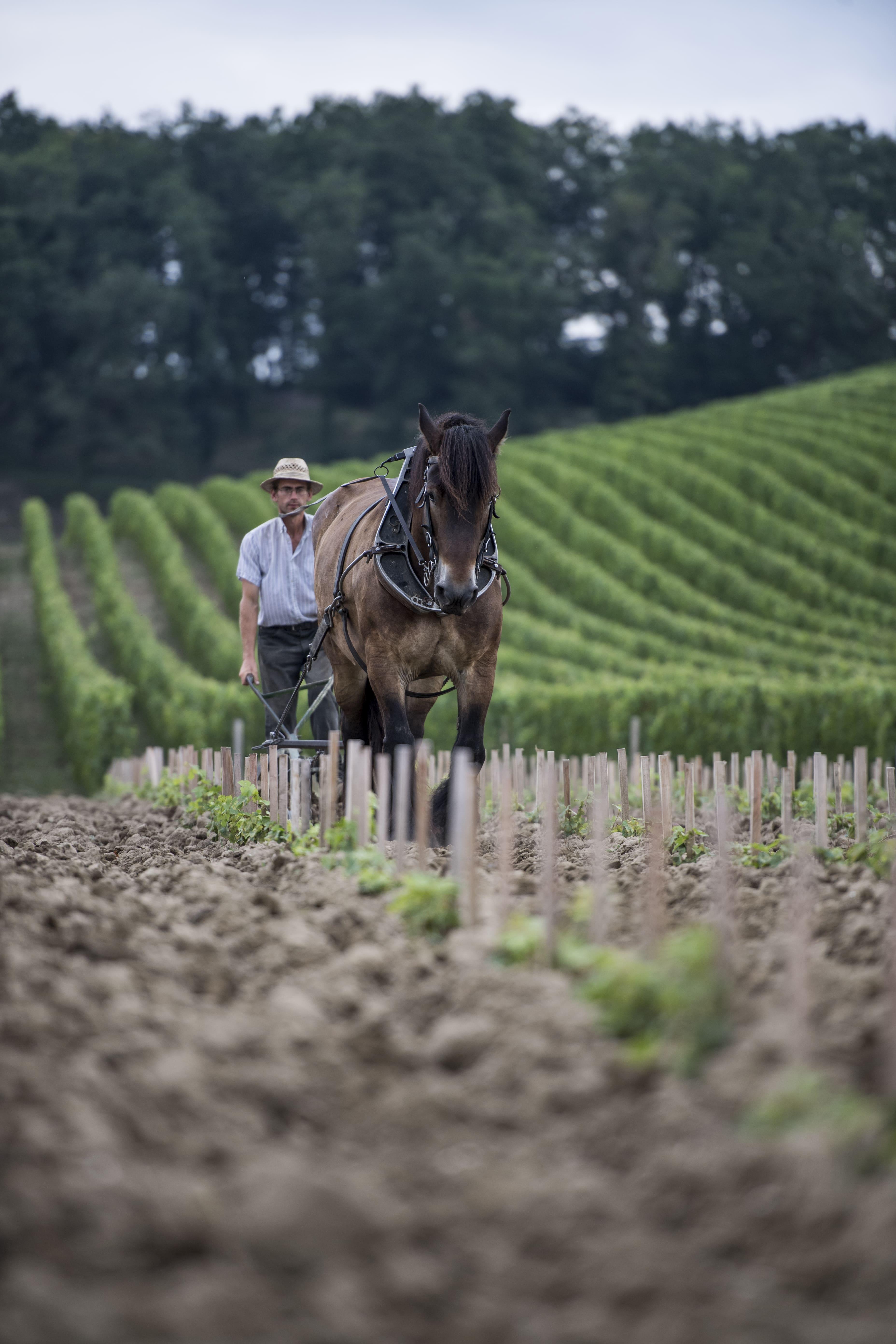 image d'un cheval dans un champ